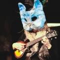 Tybalt the Troubadour / Cat